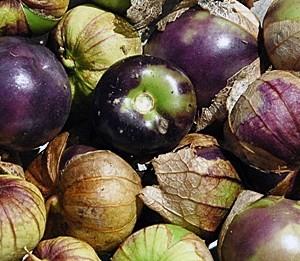 Purple tomitillo heirloom seeds