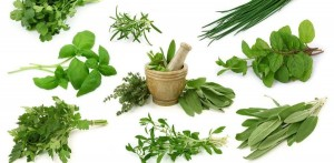the magical healing properties of herbs