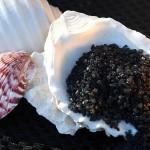 Hawaiian Molokai Black Lava Natural Sea Salt