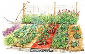 Garden illustration
