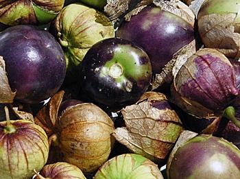 Purple_Tomitillo_5084131c5bdef